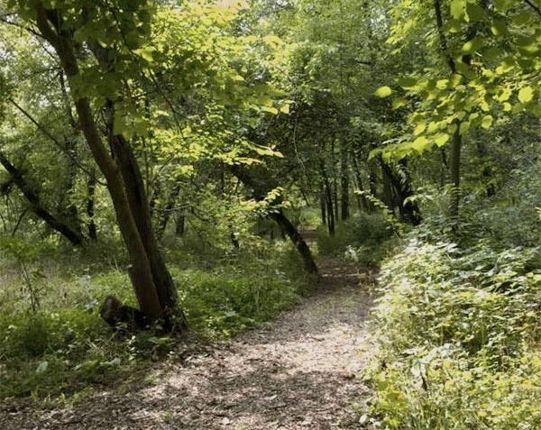 nps-path33